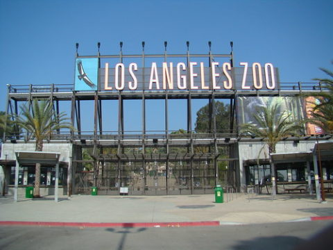 Hollywood Bowl LA Zoo Shuttle Bus